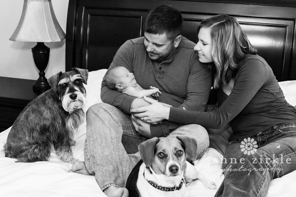 newborn with mom and dad and family dogs Mooresville and Lake Norman newborn baby photographer